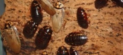 an image of a cockroach infestation in vallejo, ca