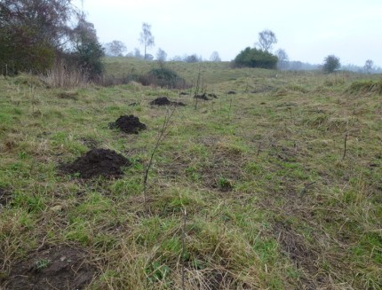 This is a picture of mole hills - mole control Vallejo, CA